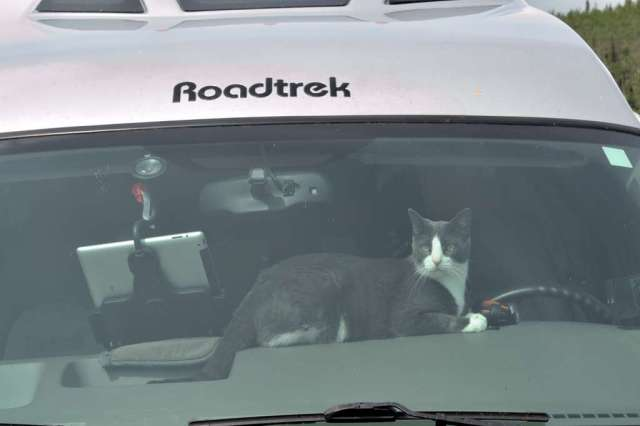 Mittens seems to want to take over the driving.