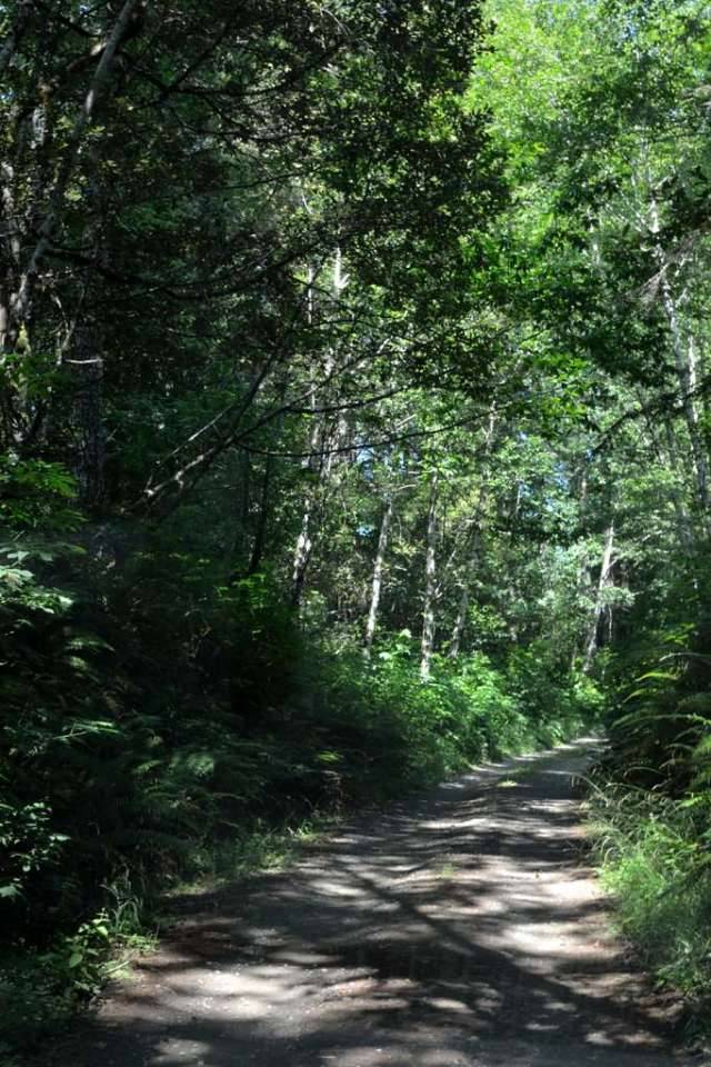The one lane road we drove looking for Oregon redwood trees.